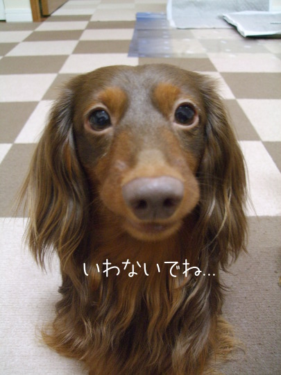 DSCF09461.jpg