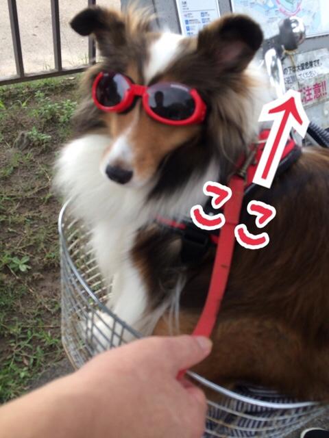 fc2blog_2015091021300195c.jpg