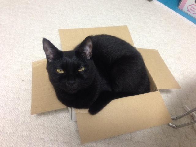 箱猫桜ちゃんその3