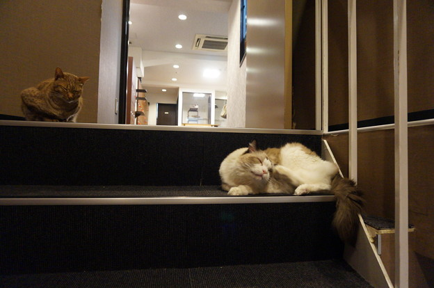 階段にも居ますよ~