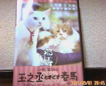 猫侍 いやし猫DVD