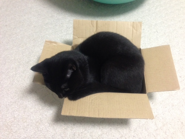 箱猫桜ちゃんその2