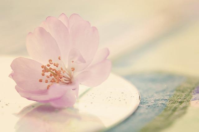 flower-596508_640.jpg