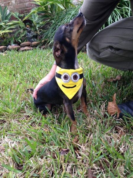犬用ミニオンのバンダナ