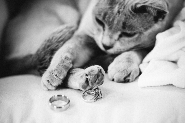 KittyRings_happy_pp_w920_h613.jpg