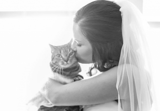 theknot_wedding-cat-2.jpg