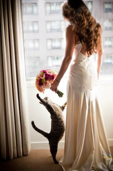 wedding-photos-with-pet-cat_2015082612293747d.jpg