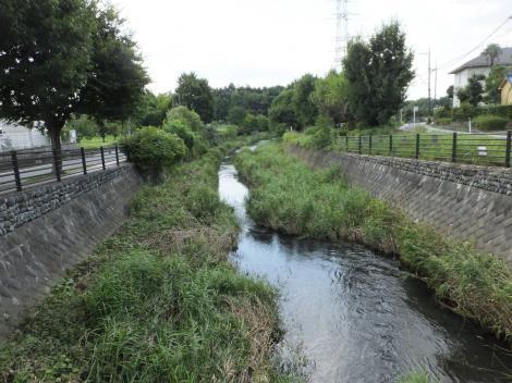 草木橋より和泉川下流を望む