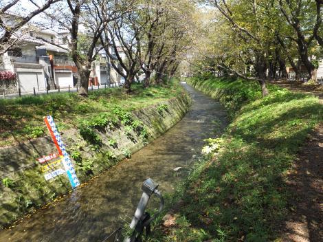 引地川・大和市福田八幡橋より上流を望む