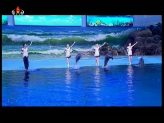 runra dolphin showflv_000257352