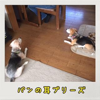 IMG_2655.jpg