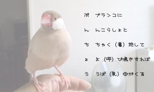 ラテ欄風縦読みで文鳥_1