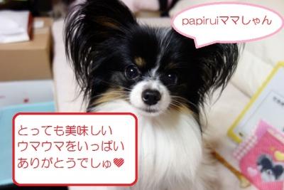 お礼でしゅ (640x427)