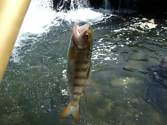 2015最後の渓流釣り24