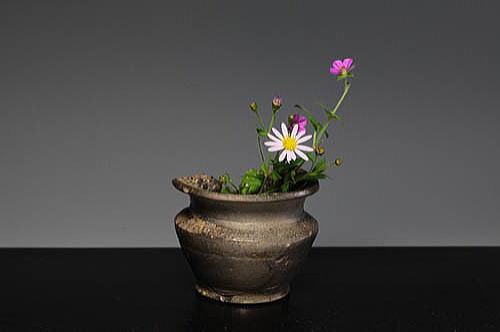 f 須恵器 広口壺 のこん菊