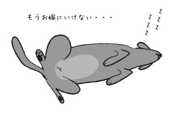 仰向けに寝る犬