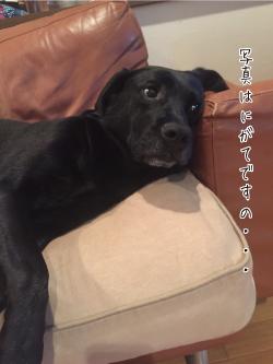 目をそむける犬