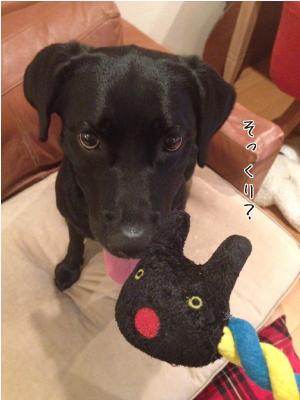 犬とオモチャ