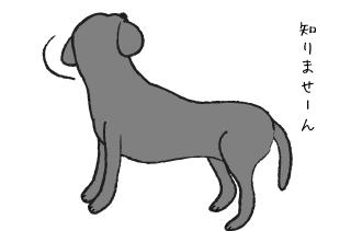 知らん顔する犬