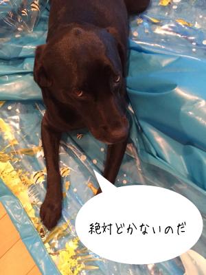 プールに乗る犬01