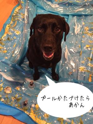 プールに乗る犬02