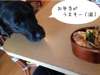 弁当をねらう犬
