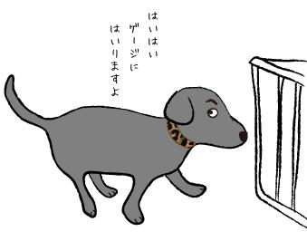 お利口な犬