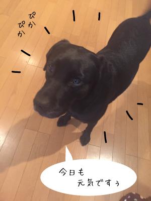ぴかぴかの犬