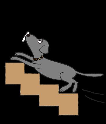 階段を上がる犬