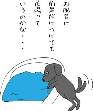 足湯する犬
