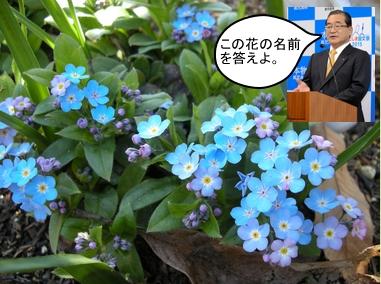 花の名前を答えよ