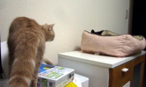 先住猫に近づく末猫