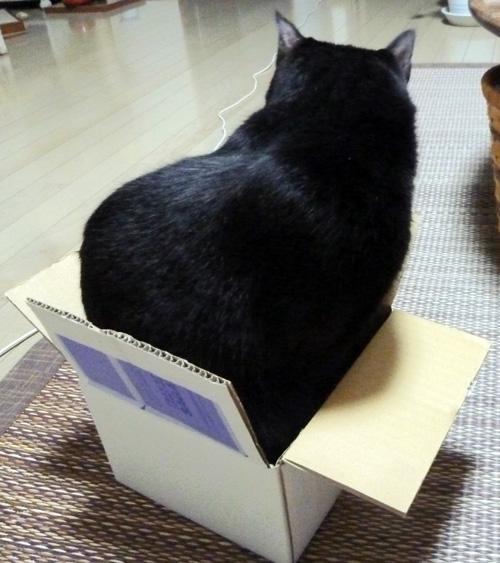 小さな箱に入るチョコ