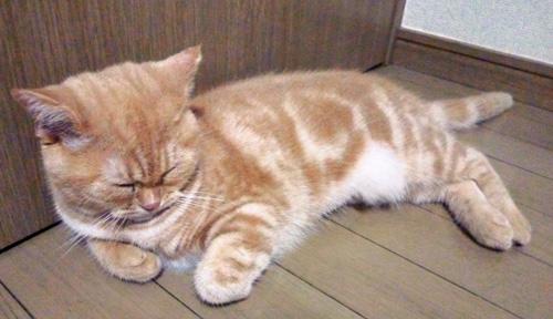 眠るきなこ