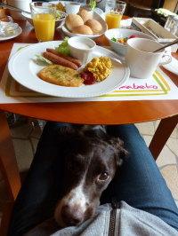 朝食とサスケ