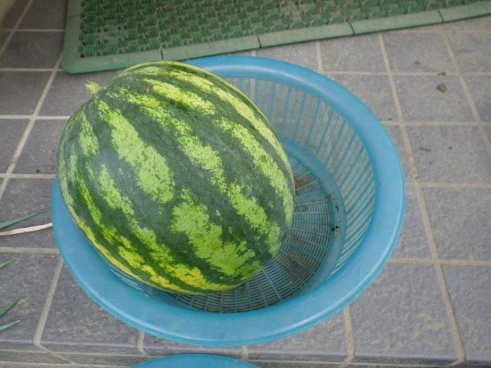 収穫3_15_08_23