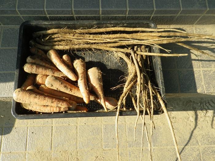 収穫5_15_08_23