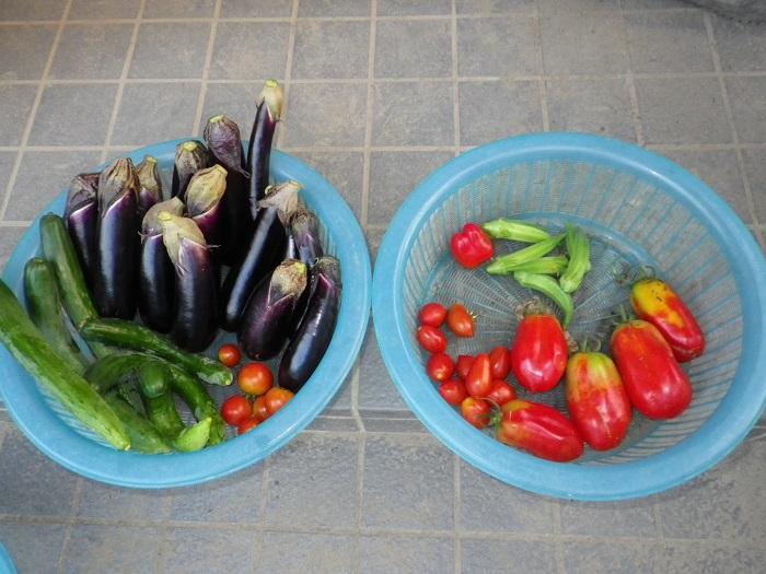 収穫15_08_24