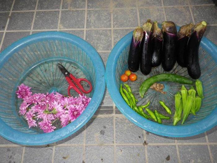収穫15_09_01