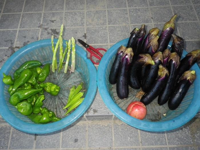 収穫15_09_04