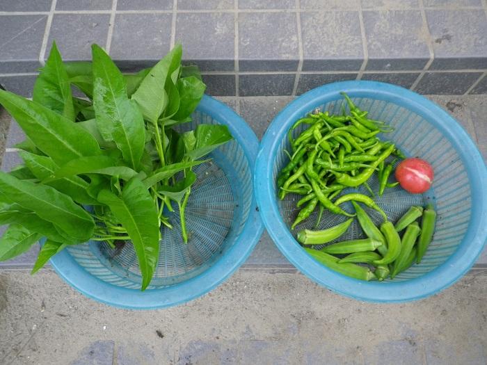 収穫2_15_09_06