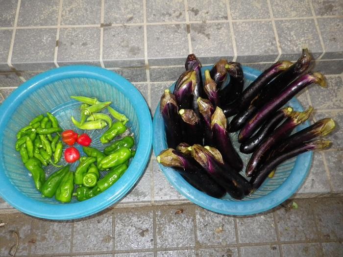 収穫15_09_10