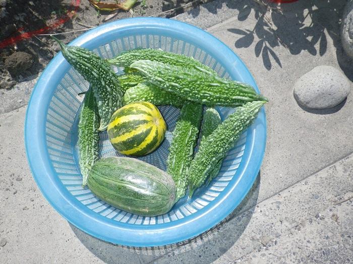 収穫3_15_09_12