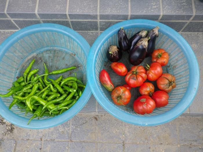 収穫2_15_09_13