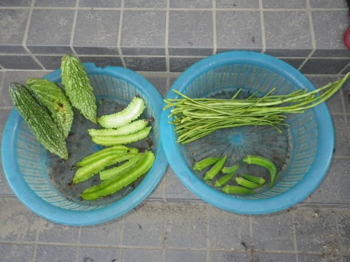 収穫1_15_09_14