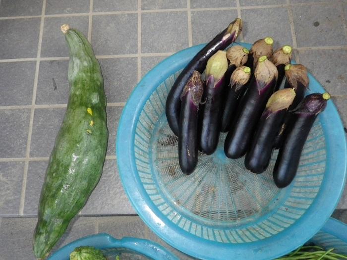 収穫2_15_09_14
