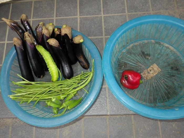 収穫15_09_16