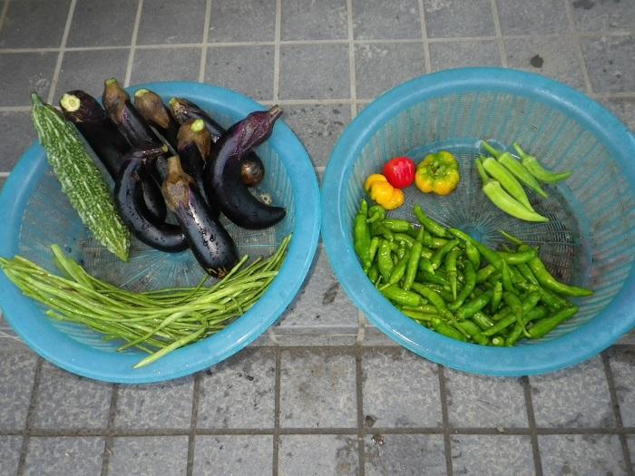 収穫15_09_18