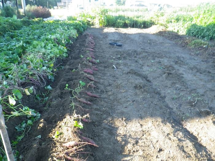 収穫2_15_09_19