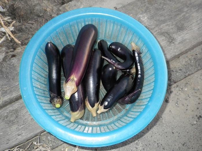 収穫15_09_20